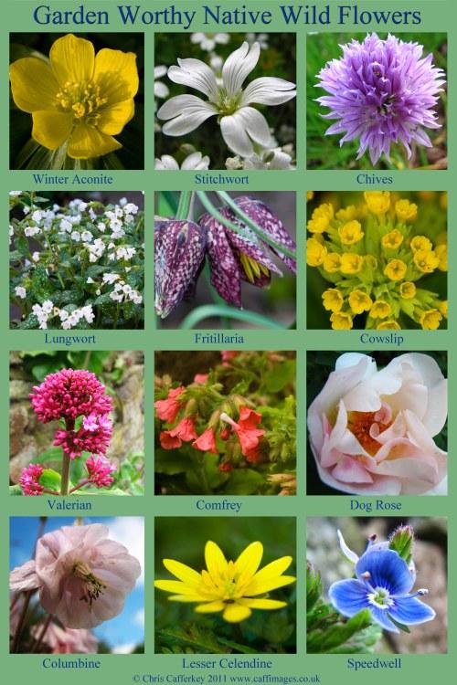 12 wild flower poster