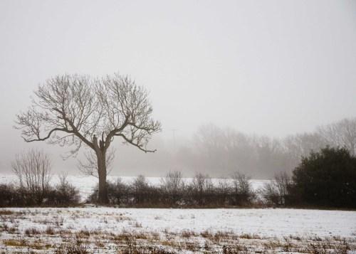 fields in the fog