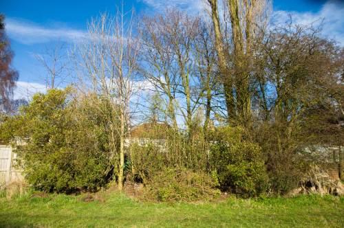 overgrown-hedge