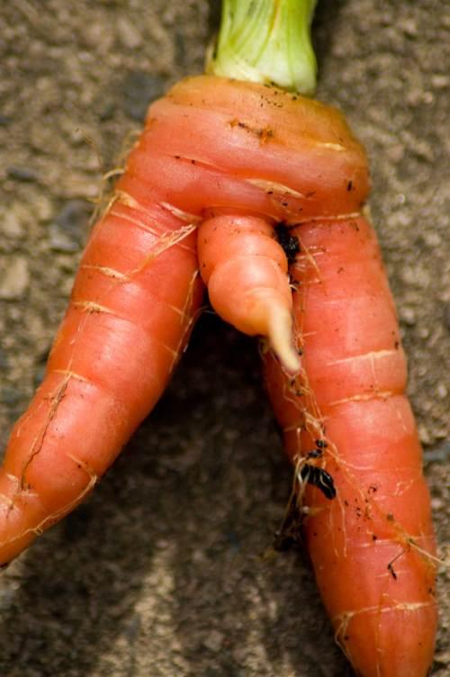 split carrot