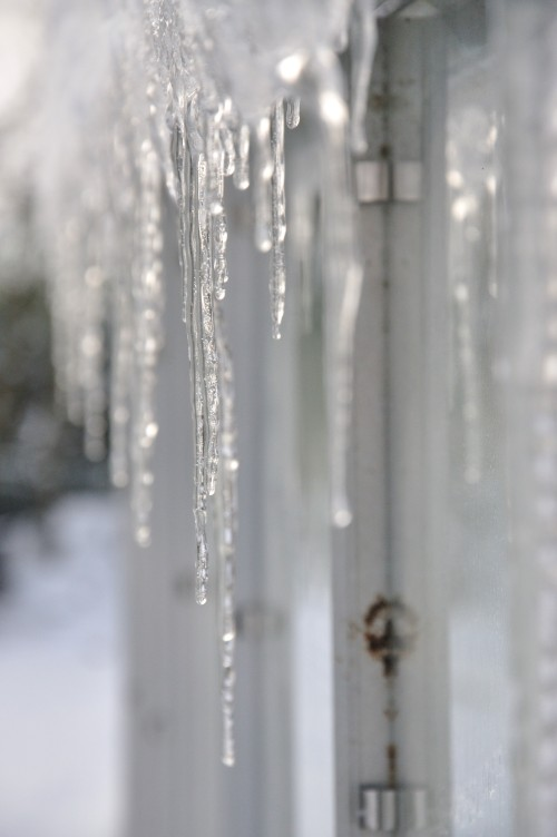 Icy Greenhouse