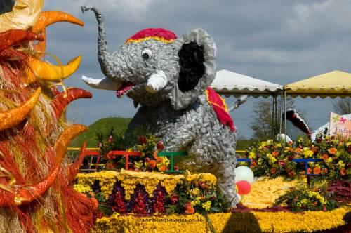 Spalding's Elephant!