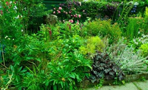 Garden After a Year