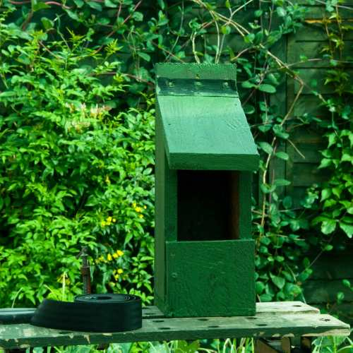 Robin open nest box