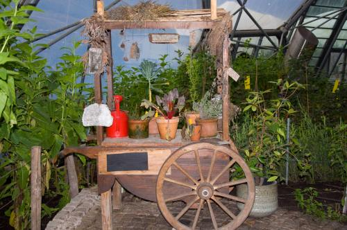 Plant-and-produce-display,-Eden-Project-Cornwall