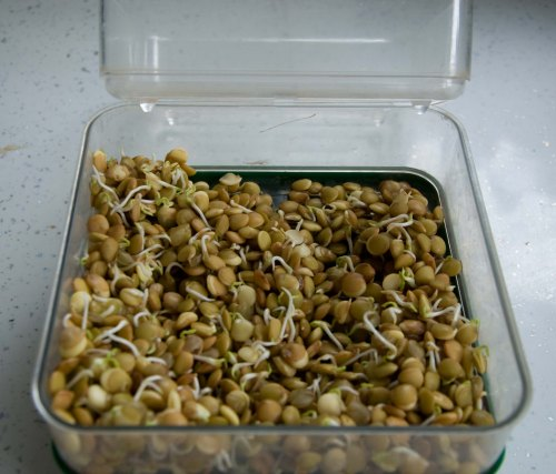 sprouted seeds0001_2